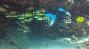 Plongée sous-marine-Grand Baie-Baptême de plongée à Grand Baie, au Nord de l'ïle Maurice-5