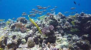 Plongée sous-marine-Grand Baie-Plongée Exploration à Grand Baie, Maurice-8