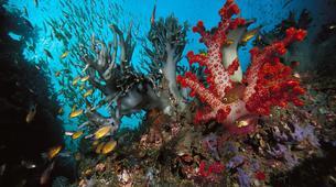 Plongée sous-marine-Grand Baie-Plongée Exploration à Grand Baie, Maurice-1