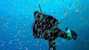 Scuba Diving-Bayahibe-PADI Open Water course in Bayahibe, Dominican Republic-3