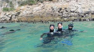 Snorkeling-Plettenberg Bay-Swimming with seals in Robberg Nature Reserve-3