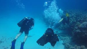 Plongée sous-marine-Grand Baie-Baptême de plongée à Grand Baie, au Nord de l'ïle Maurice-4
