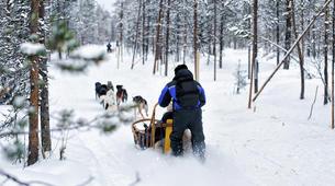 Dog sledding-Luleå-Dog sledding taster excursion in Swedish Lapland-4