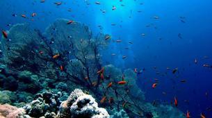 Scuba Diving-Sharm El-Sheikh-Scuba diving packages in Sharm El-Sheikh-2