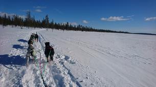 Dog sledding-Luleå-Dog sledding taster excursion in Swedish Lapland-3