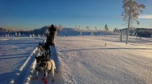 Dog sledding-Luleå-Dog sledding taster excursion in Swedish Lapland-1