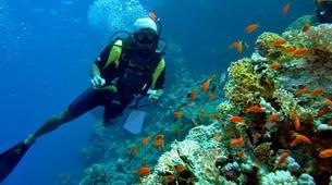 Scuba Diving-Sharm El-Sheikh-PADI scuba diving course in Sharm El-Sheikh-2