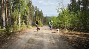 Mountain bike-Luleå-Dog Mountainbike or Bikejoring in Swedish Lapland-1