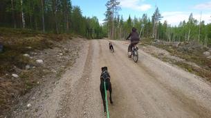 Mountain bike-Luleå-Dog Mountainbike or Bikejoring in Swedish Lapland-5