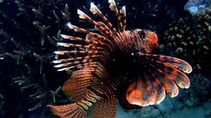 Scuba Diving-Sharm El-Sheikh-Scuba diving packages in Sharm El-Sheikh-4