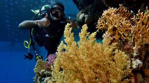 Scuba Diving-Sharm El-Sheikh-PADI Discover scuba diving course in Sharm El-Sheikh-4
