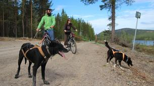 Mountain bike-Luleå-Dog Mountainbike or Bikejoring in Swedish Lapland-3