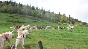 Chiens de traîneau-Sentenac-de-Sérou-Randonnée Cani-kart en Ariège près de Foix-2