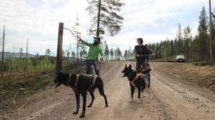 Mountain bike-Luleå-Dog Mountainbike or Bikejoring in Swedish Lapland-2