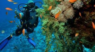 Scuba Diving-Sharm El-Sheikh-PADI scuba diving course in Sharm El-Sheikh-5