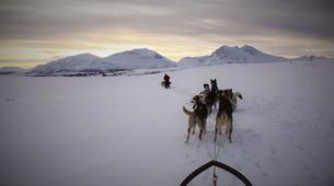 Chiens de traîneau-Tromsø-Expédition Chiens de Traîneau 2 Jours à Tromsø-6