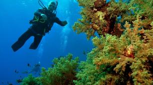 Scuba Diving-Sharm El-Sheikh-PADI Discover scuba diving course in Sharm El-Sheikh-2