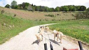 Chiens de traîneau-Sentenac-de-Sérou-Randonnée Cani-kart en Ariège près de Foix-6