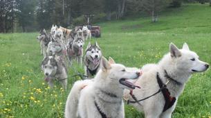 Chiens de traîneau-Sentenac-de-Sérou-Randonnée Cani-kart en Ariège près de Foix-5