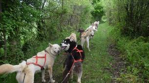 Chiens de traîneau-Sentenac-de-Sérou-Randonnée Cani-kart en Ariège près de Foix-1