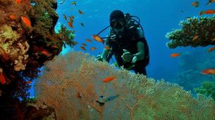 Scuba Diving-Sharm El-Sheikh-PADI scuba diving course in Sharm El-Sheikh-1