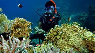 Scuba Diving-Sharm El-Sheikh-PADI scuba diving course in Sharm El-Sheikh-6