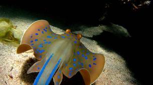 Scuba Diving-Sharm El-Sheikh-Scuba diving packages in Sharm El-Sheikh-5