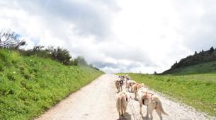 Chiens de traîneau-Sentenac-de-Sérou-Randonnée Cani-kart en Ariège près de Foix-3