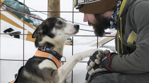 Dog sledding-Luleå-Dog sledding taster excursion in Swedish Lapland-5