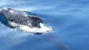 Experiences Wildlife-Los Gigantes, Tenerife-Whale watching tour from Los Gigantes, Tenerife-12