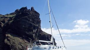 Experiences Wildlife-Los Gigantes, Tenerife-Whale watching tour from Los Gigantes, Tenerife-7