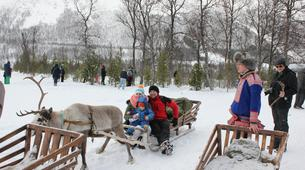 Traîneau à rennes-Tromsø-Reindeer sledding day trip in Tromsø-3