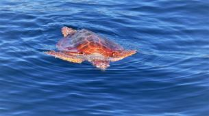 Wildlife expedition-Los Gigantes, Tenerife-Whale watching excursions from Los Gigantes-9