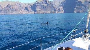 Wildlife Experiences-Los Gigantes, Tenerife-Whale watching tour from Los Gigantes, Tenerife-14