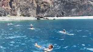 Experiences Wildlife-Los Gigantes, Tenerife-Whale watching tour from Los Gigantes, Tenerife-3