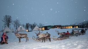 Traîneau à rennes-Tromsø-Reindeer sledding day trip in Tromsø-6