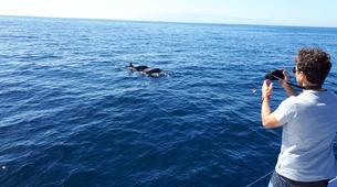 Wildlife Experiences-Los Gigantes, Tenerife-Whale watching tour from Los Gigantes, Tenerife-6