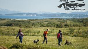Randonnée / Trekking-Tromsø-Trekking with huskies in Tromsø-2
