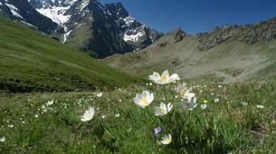 Randonnée / Trekking-Vallée d'Aoste-Randonnée au sommet du Grand Paradis dans les Alpes italiennes-3
