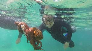 Snorkeling-Noja-Snorkeling excursion in Noja near Santander-4
