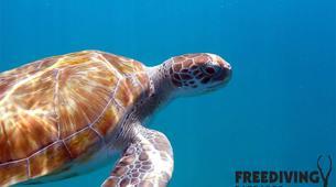 Freediving-Bridgetown-AIDA 1 & 2 Freediving course in Barbados-3