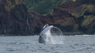 Wildlife Experiences-Pico-Whale Watching Excursion from Lajes de Pico in Pico Island-3