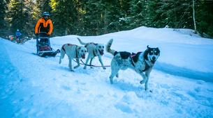Survival Training-Jura-Stage de survie grand froid Musher dans le haut Jura-3