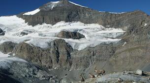Randonnée / Trekking-Bonneval-sur-Arc, Haute Maurienne-Trek Arctique à destinations des Icebergs de Haute Maurienne-3