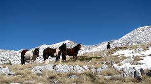 Randonnée / Trekking-Makarska-Hiking tour in Biokovo Mountain, Makarska-1