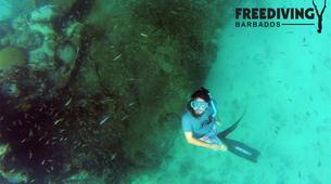 Freediving-Bridgetown-2 Day PADI Freediver course in Barbados-2