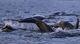 Wildlife Experiences-Alta-Whale Watching from Alta in Norway-1