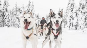 Dog sledding-Rovaniemi-Mushing Masterclass near Rovaniemi-2
