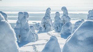 Raquette à Neige-Rovaniemi-Lapland wilderness snowshoe excursion from Rovaniemi-5