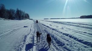 Dog sledding-Kiruna-Morning Dog sledding Tour, near Kiruna-4